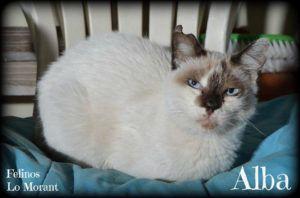 Adoptado-Alba