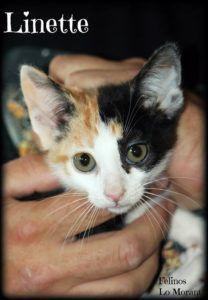 Adoptado-Linette