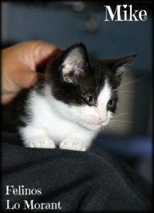 Adoptado-Mike