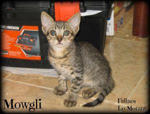 Adoptado-Mowgli