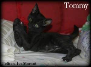 Adoptado-Tommy