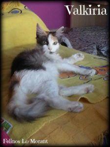 Adoptado-Valkiria