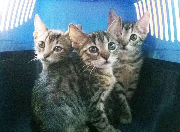 gatitos puerto buen estado