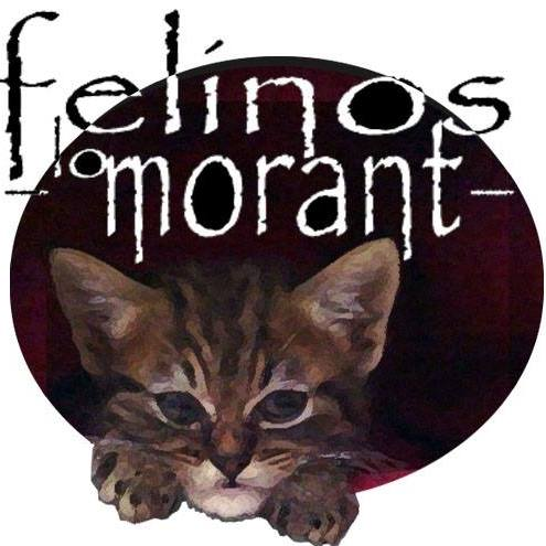 Felinos Lo Morant